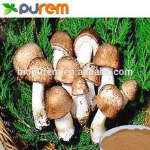 Hot saling agaricus extract