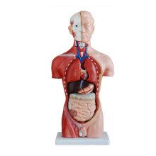 42CM Анатомическая модель туловища туловища (13 частей), модель человеческого торса