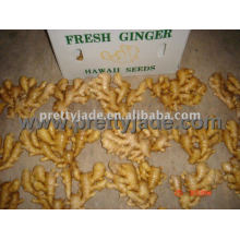 fresh half dry ginger