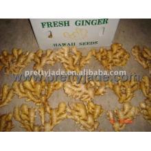 fresh half dry ginger
