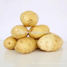 Китай свежий органический сладкий Спецификация картофель картофель