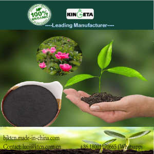 nutrition enhancer organic biochar fertilizer