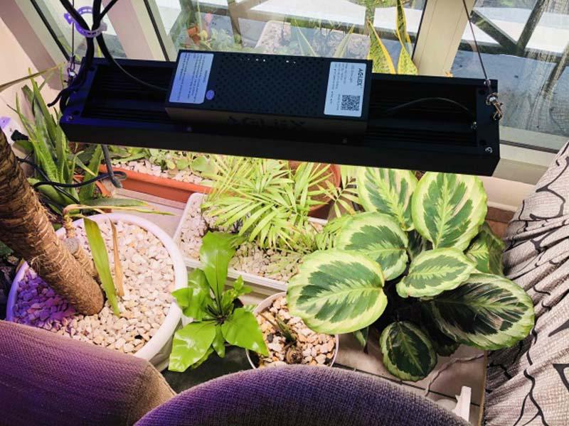 G110 grow light