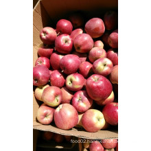 Red Star Apple of China with Good Quality/ Fresh Fruits