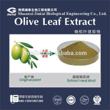 40% 60% olive leaf extract oleuropein extract cleupin