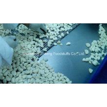 Carton Packing Fresh Peeled Garlic in High Quality