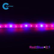 Rode blauwe lichte Greenhous Plant geleid licht groeien