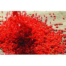 Bayas secas de Goji de Wolfberry secas