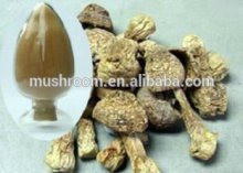 Agaricus blazei extract (ABM mushroom)
