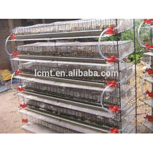 Quail cage/quail breeding prospects are booming