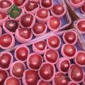 gala chinois pomme pomme fraîche pour la nouvelle saison