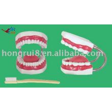 Modelo de cepillado de dientes gigantes, modelo de cuidado dental