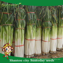 Suntoday vegetable F1 Organic garden buying online English green Chinese scallion onion seeds bulk in supplier(81009)