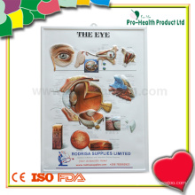 Тимбированная диаграмма анатомии человеческого глаза