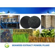 Poder do extrato da alga solúvel em água para a agricultura