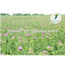 Liefern Sie hochwertigen organischen reinen natürlichen Mariendistelsamenextrakt silymarin 80% (UV) Preis