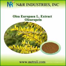 Confiable proveedor extracto de hoja de olivo en polvo Oleuropeína 10% / 20% / 40%