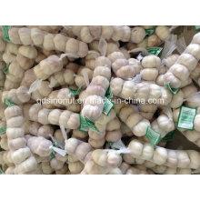 Нормальный белый чеснок 5.0cm & 5.5cm 6p / Bag