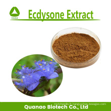 Extrait d'ecdysone 40% 50% 100% naturel