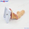 PNT-0748 Modèle de pathologie de l'oesophage anatomie oesophagienne