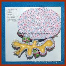 Модель клеток поджелудочной железы человека для медицинского обучения