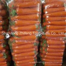 Новый Свежий Урожай Моркови