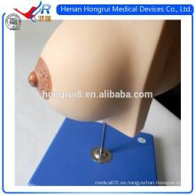 ISO Medical Glándula mamaria en período de reposo