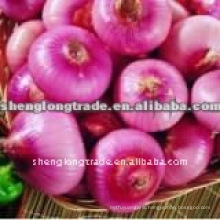 china red onion price