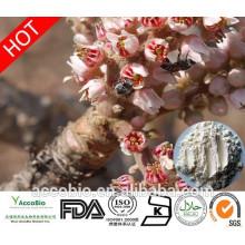Fast Delivery Free Sample 65% Boswellic Acid, Boswellia Serrata Extract