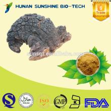 Proveedor profesional para Inonotus obliquus PE 10% -50% Polisacáridos