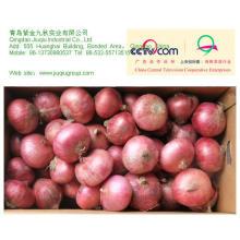 JQ 2012 Fresh Yellow/Red Onion