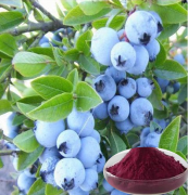 Acai Fruit extract / Euterpe badiocarpa extract / Brazilian Acai powder of Vitamin C