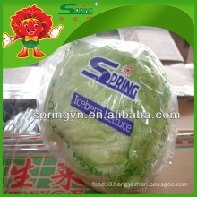 2015 Chinese decorative round shape green iceberg lettuce