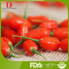 top quality organic dried goji berry from China / red goji / health food