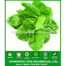 NMS01 Tuifu Acheter des graines de légumes verts, des graines d'épinards malabars