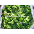 IQF frozen fresh broccoli vegetables