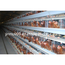 Automatic Poultry Equipment (BDT001-JF-01)