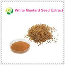 Vente chaude 100% extrait de graine de moutarde blanche
