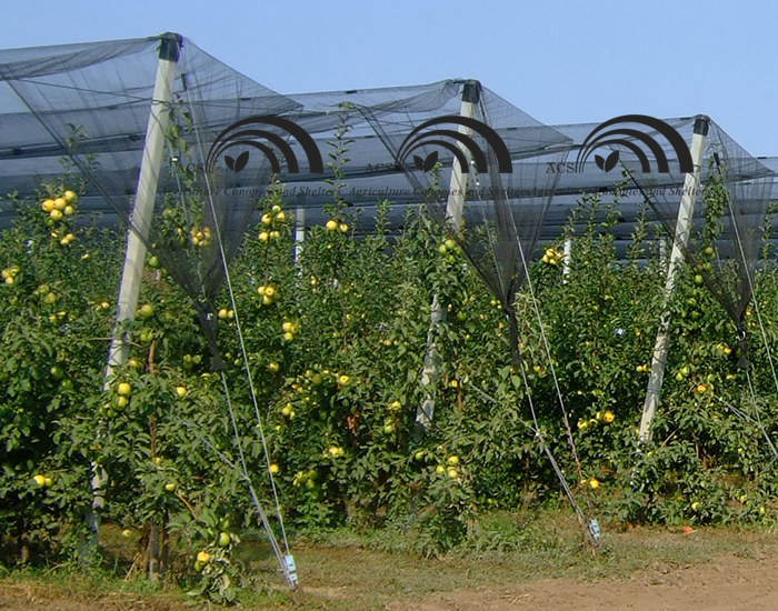 Fruit Netting Protection and Covering Strucutre