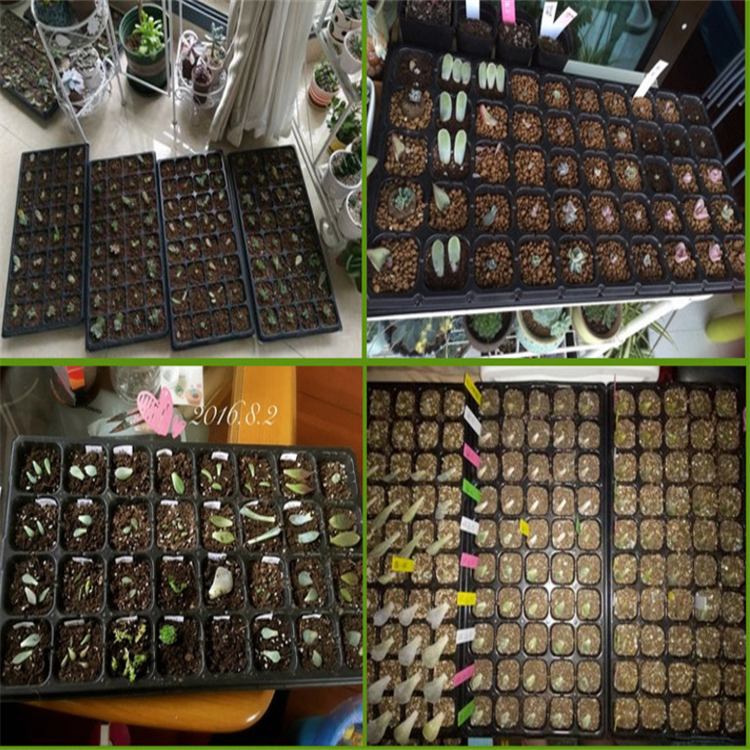 High Quality 72 / 128 / 200 Cells Seed Growing Trays/ Fodder Seed Tray