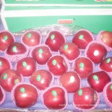 2016 Nova colheita de maçã vermelha fresca