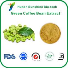 Heißer Verkauf grüne Kaffeebohne extrac 50% Chlorogensäure