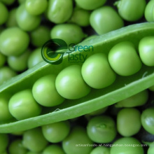 Wholesale Bulk Frozen Pea Pods