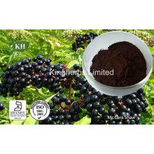 Extrait de sureau Anthocyanidines 3% à 25% par UV; 4: 1; 10: 1