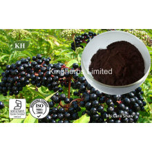 Elderberry Extract Anthocyanidins 3% to 25% by UV; 4: 1; 10: 1
