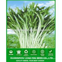 NWS02 Graines de légumes pour l'air libre, fournisseur de graines d'épinards