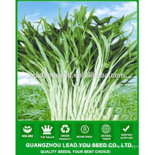 NWS02 Vegetable seeds for open air, spinach seeds supplier