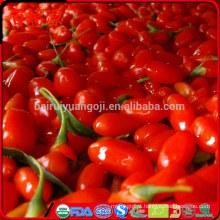 100% orgânico goji goji berries bagas secas com alta taxa de exportação