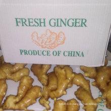 Qualité supérieure du gingembre frais chinois