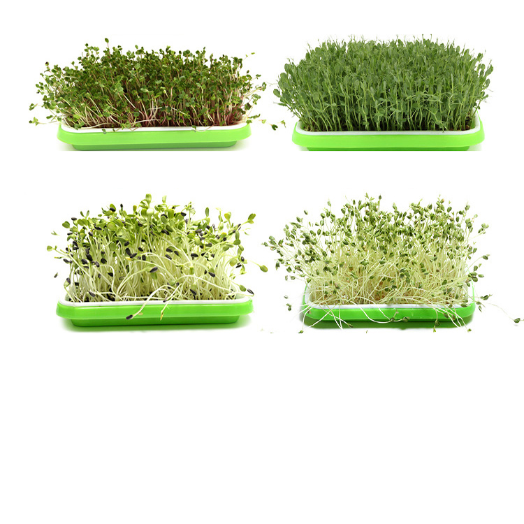 Flat PP Seed Tray plastic seed tray